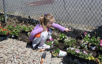 Community Garden Opens in Glendale