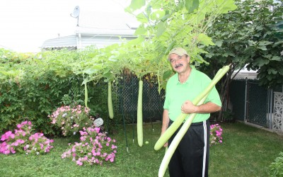 How Does Your Garden Grow? – Howard Beach Farmer Grows Them Big