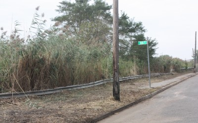 Sanitation Department Tackles Weeds in Howard Beach