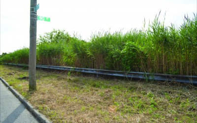 All Gone: Howard Beach Residents Get Their Weeds Whacked…Finally
