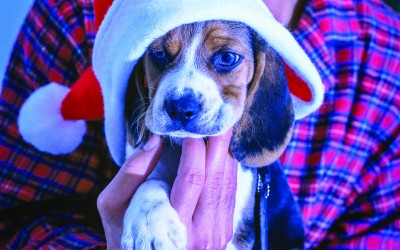 Pets As Presents–Look Before You Leap