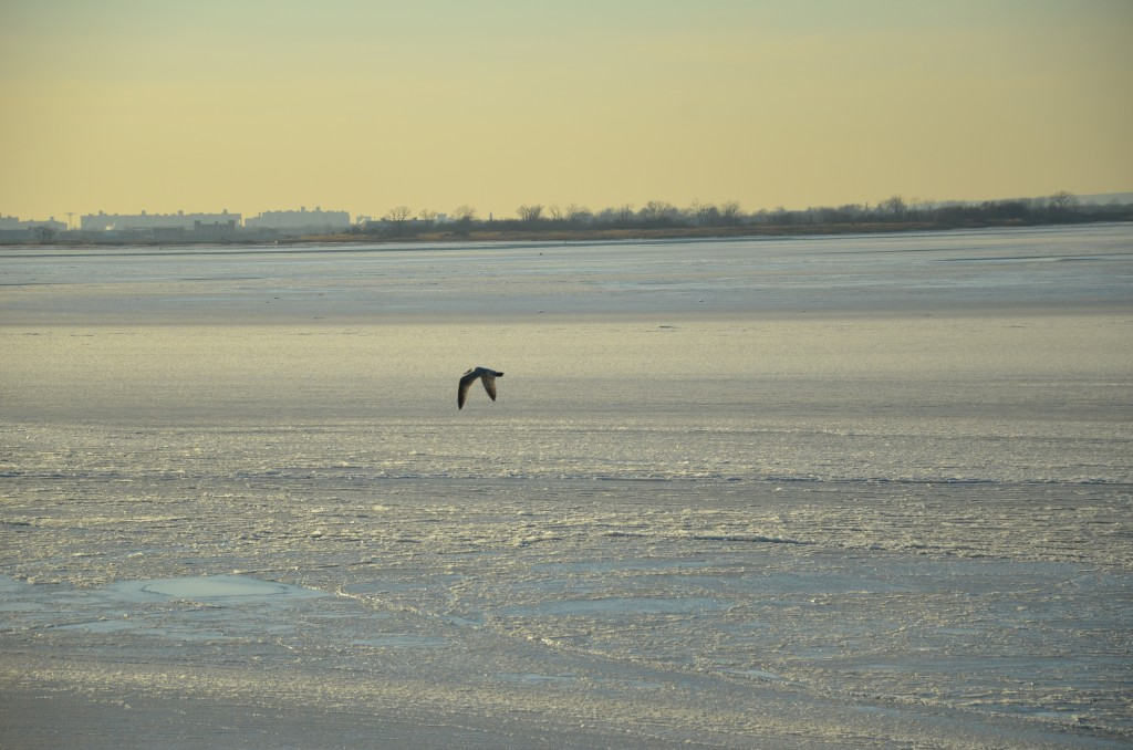 Jamaica Bay frozen 6