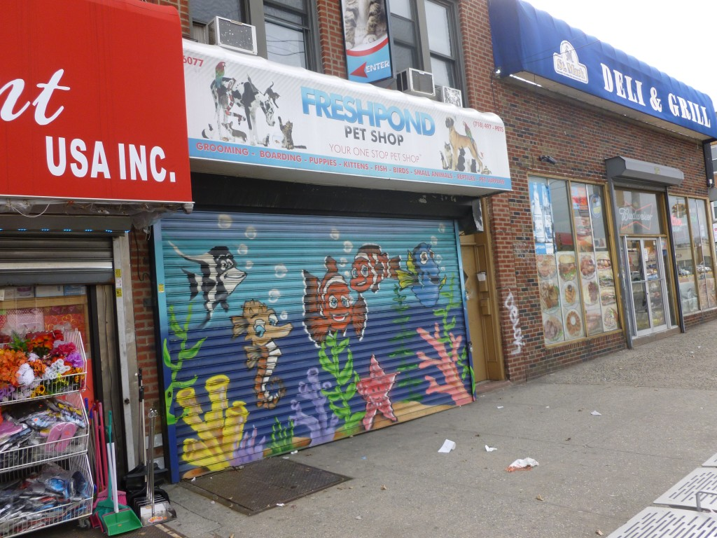 Some residents in Maspeth are accusing the Fresh Pond Pet Shop of animal abuse. Photo by Phil Corso