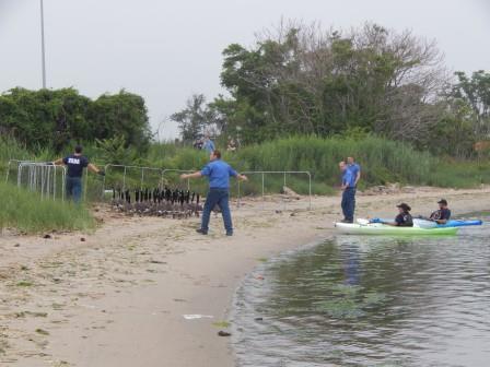 Canada geese are rounded up at Jamaica Bay Wildlife Refuge.  Photo courtesy USDA