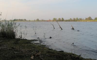 Restore West Pond To Freshwater