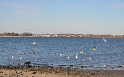 Law Battles Jamaica Bay Dumping