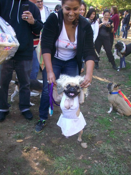 Bella as Marilyn Monroe with owner Jolenny Rodriguez of Brooklyn won first place for small dogs  sc 1 st  The Forum Newsgroup & Howling Good Time at Dogsu0027 Costume Contest | The Forum Newsgroup