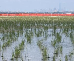 Jamaica Bay Project Garners Votes in Nationwide Contest