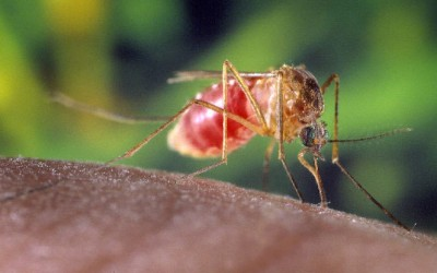 Howard Beach Man Being Treated for West Nile Virus: Report