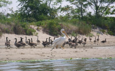 Jamaica Bay Wildlife Refuge to Remove Invasive Plants, Add Native Ones