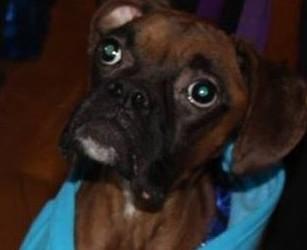 Ridgewood Man Charged with Animal Cruelty