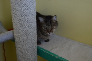 Animal shelters and rescue leagues in the New Hope partnership, like Bobbi and the Strays, often take in feral or disabled cats, rehabilitate or reacclimate them, and offer them for adoption.  Forum Photo by Eugénie Bisulco
