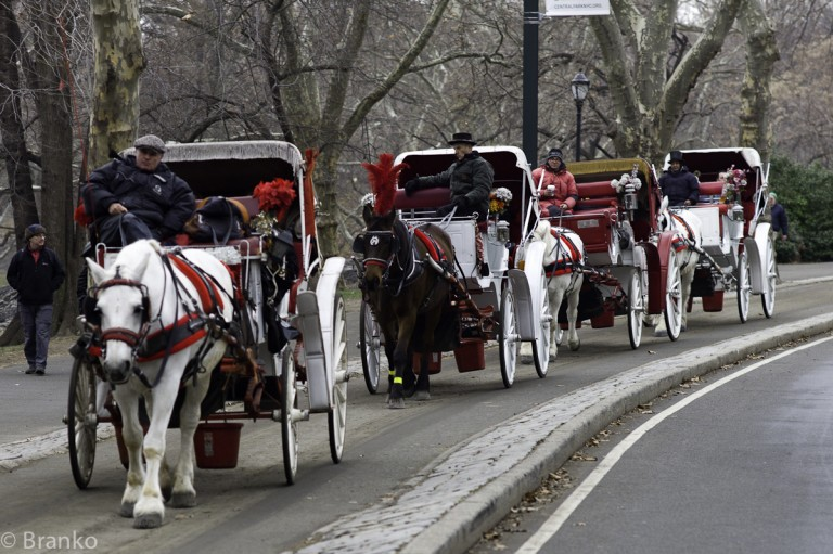 City, Unions Reach Deal on Horse Carriages