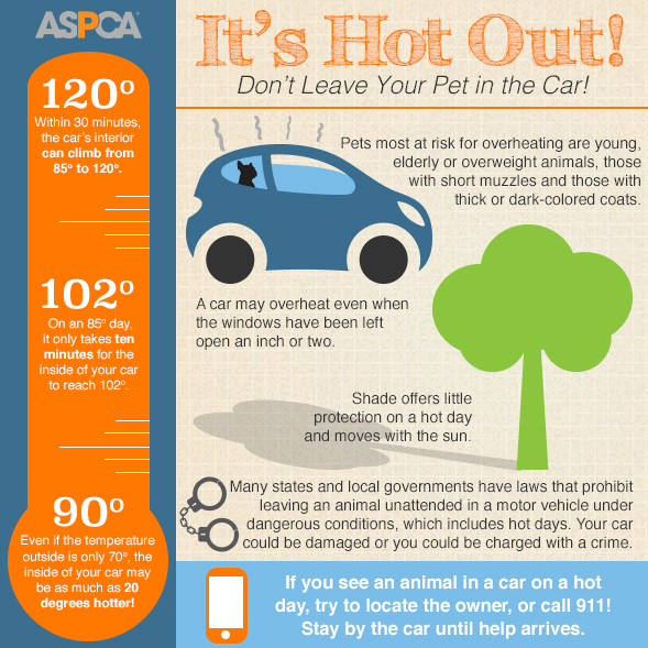 ASPCA Details the Dangers of Leaving your Pet in the Car