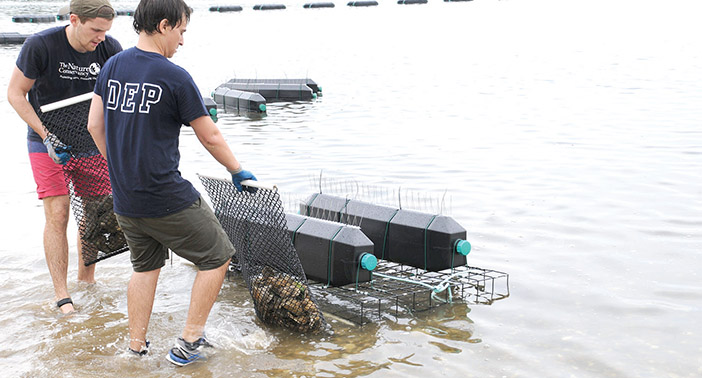 Jamaica Bay Oyster Project to Help Improve Water Quality: City
