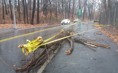 Nor'easter Wallops Queens With Wind Gusts, Driving Rain