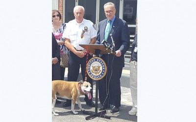 Schumer Urges USDA  to Bring Back Online Animal Cruelty Database