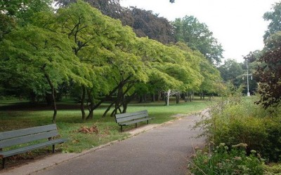 Police Search Kissena Park for Two Bodies: Reports