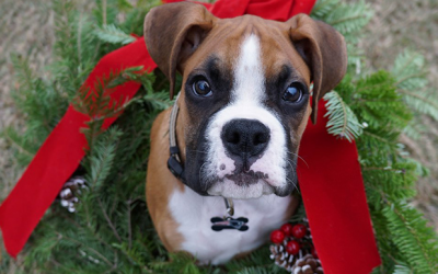 Think Twice Before Gifting a Pet  this Holiday Season: Addabbo