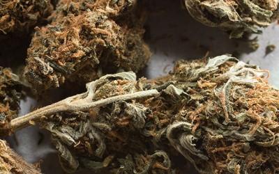 State Report Backs Marijuana Legalization