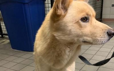 Cops Seek to Reunite Lost Pooch with Owner