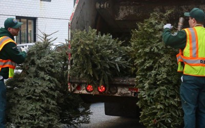 It's 'Tree-cycling' Season in the Big Apple