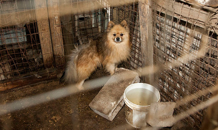 State Pols' New Bill  Takes on Puppy Mills