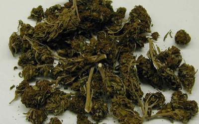 Pols Tout  Marijuana Freedom & Opportunity Act