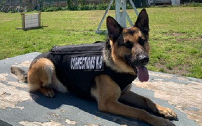 Group Gifts Protective Vests to DOC Dogs