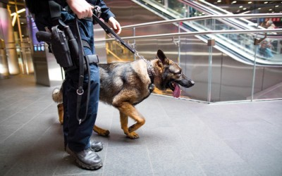 Trump Budget Cuts K9 Bomb Teams