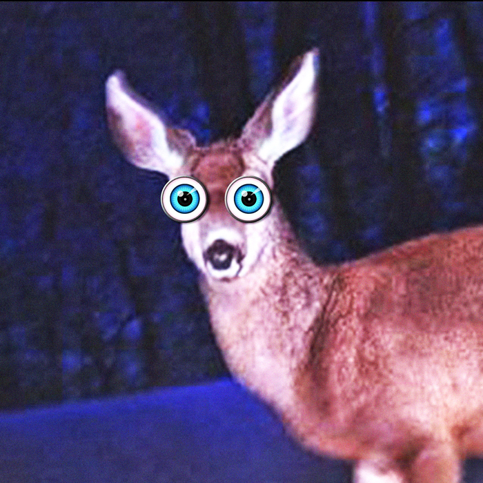 A DOE IN THE HEADLIGHTS