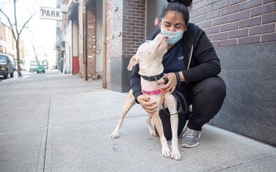 ASPCAAnnounces $1M in Funding  to Support Animal Care Centers of NYC