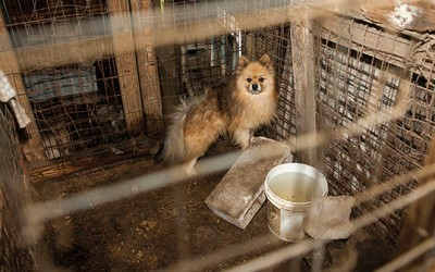 State Senate Votes in Favor of Bill  to Ban the Sale of Puppy Mill Animals